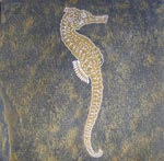 Sea Horse Engraving